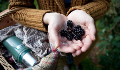 blackberrying-blog-pic