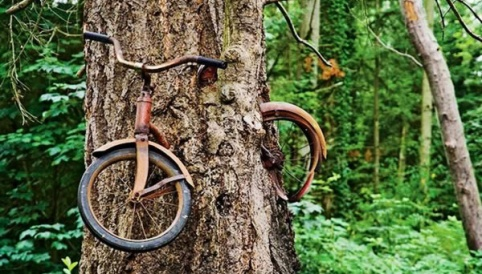 Tree-bicycle-blog